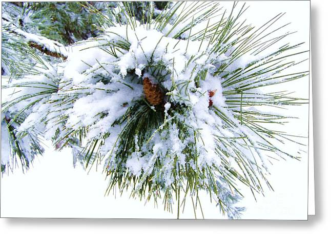 Greeting Card featuring the photograph Spirit Of Pine by Margie Amberge