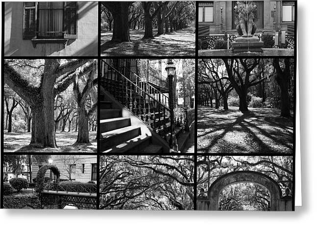 Spirit Of Savannah - Black And White Greeting Card by Carol Groenen