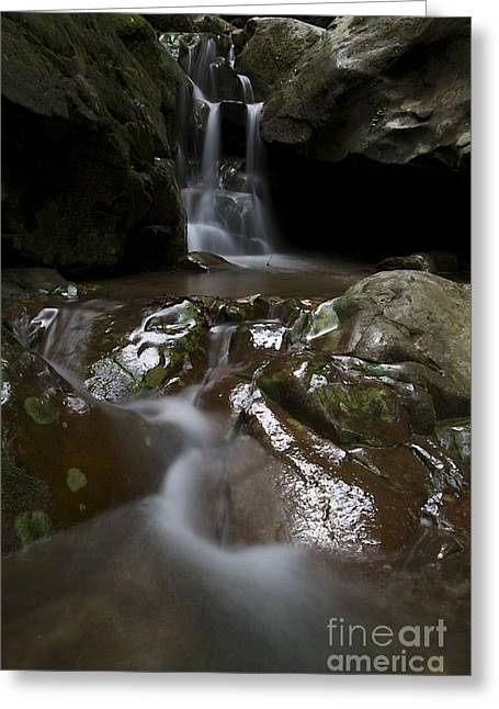 Greeting Card featuring the photograph Spirit Of The Forrest  by Gary Bridger