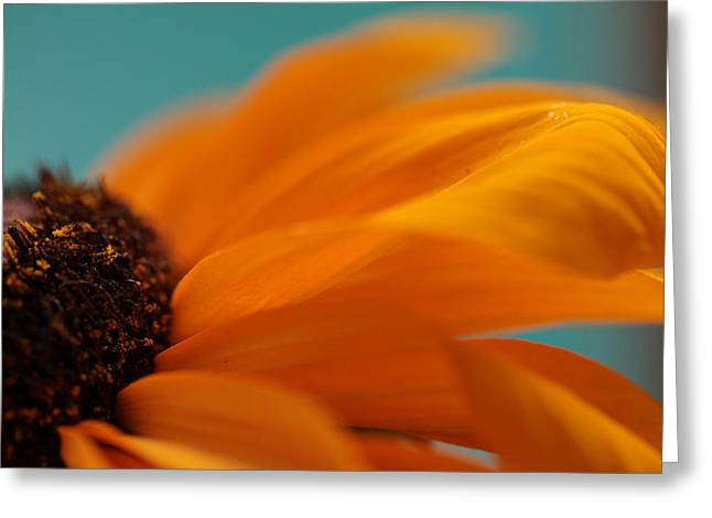 Spirit Of The Morning Greeting Card by Connie Handscomb