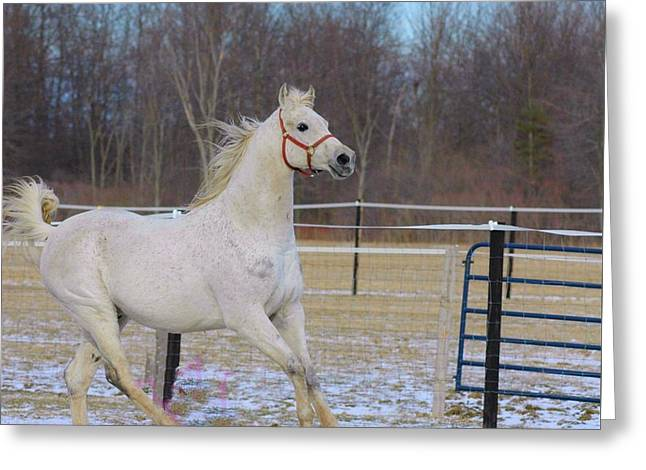Spirited Horse Greeting Card by Kathleen Struckle