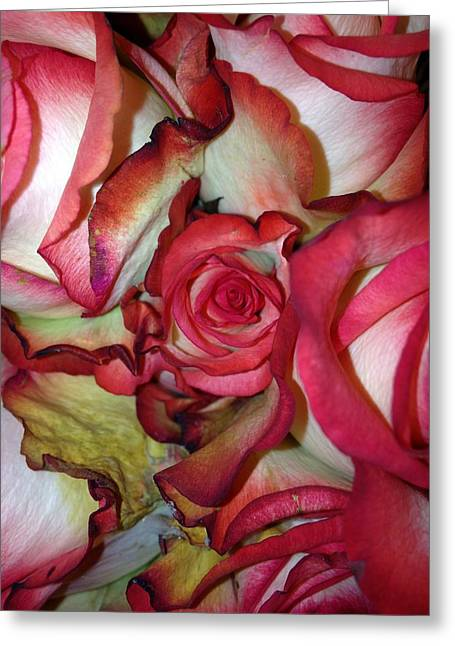 Spirited Rose  Greeting Card