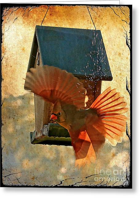Splash And Dash - Digital Art Greeting Card by Carol Groenen