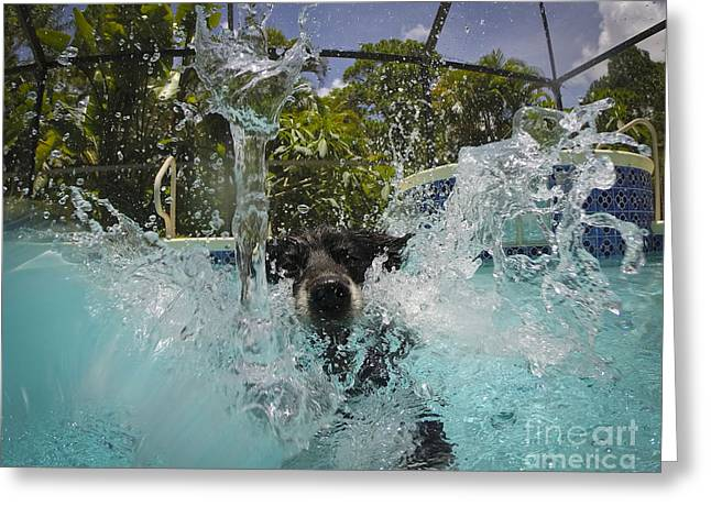 Splash Down Greeting Card