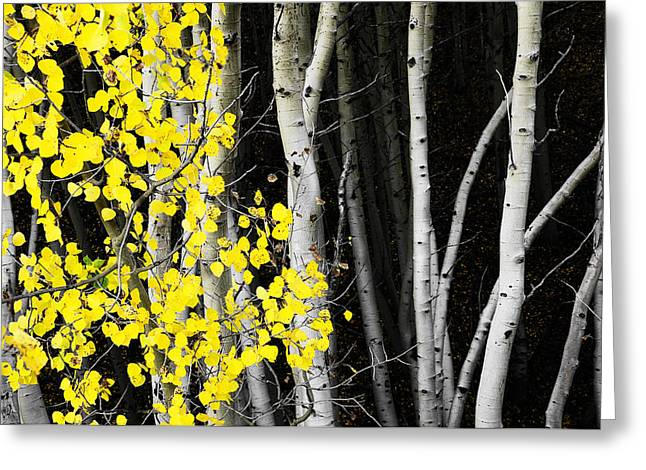 Splash Of Gold Greeting Card by The Forests Edge Photography - Diane Sandoval
