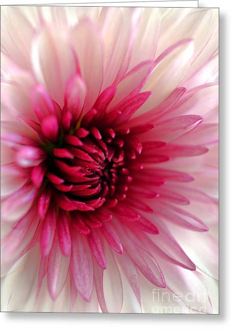 Splash Of Pink Greeting Card