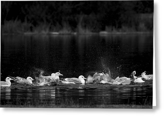 Greeting Card featuring the photograph Splashing Seagulls by Yulia Kazansky