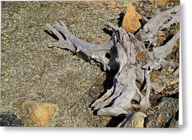 Splayed Against The Parched Shore Greeting Card by Lynda Lehmann