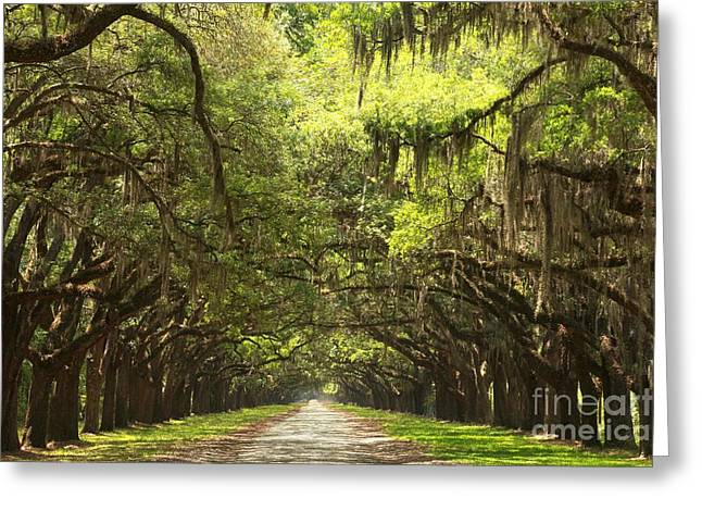 Splendid Oak Drive Greeting Card