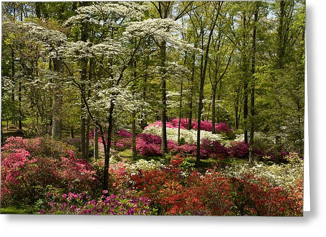 Splendor - Azalea Garden Greeting Card