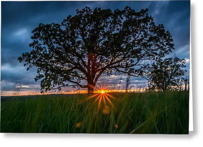 Splendor In The Grass Greeting Card