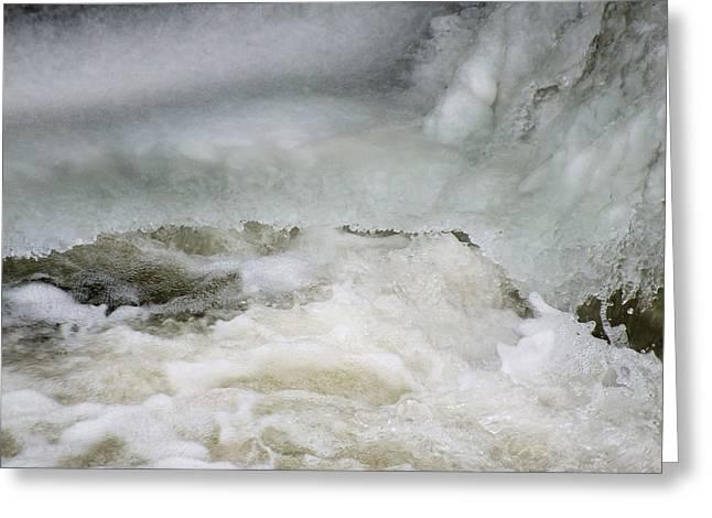 Splish Splash Greeting Card by Gene Cyr