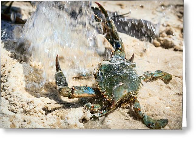 Splish Splash Greeting Card by Sennie Pierson