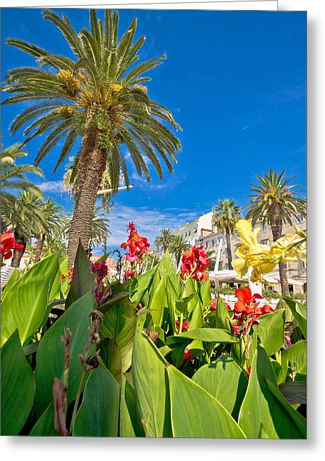 Split Riva Palms And Flowers Greeting Card
