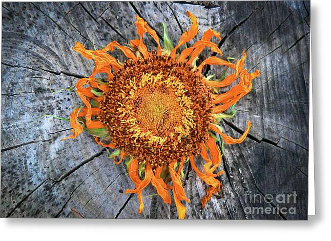 Split Sunflower Greeting Card by Angela Wright