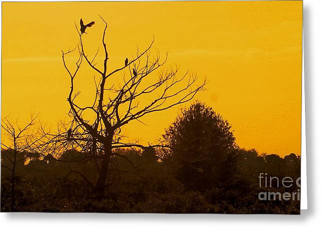 Spooky Tree Greeting Card by Joseph Williams