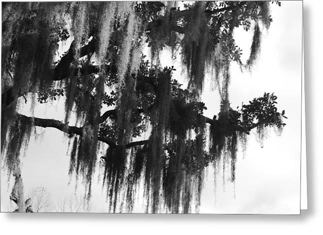 Spooky Trees Greeting Card by Cyndi Lenz