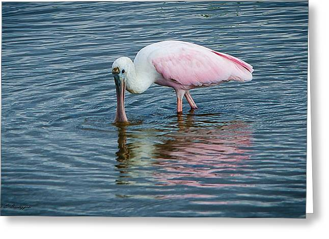 Greeting Card featuring the photograph Spoonbill by Allen Biedrzycki