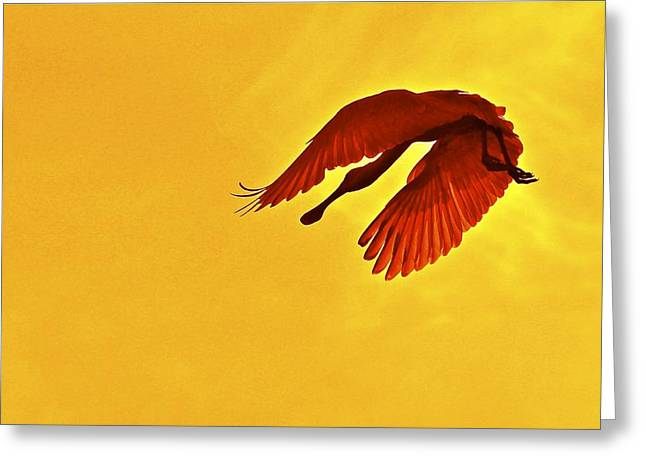 Spoonbill At Sunset Greeting Card