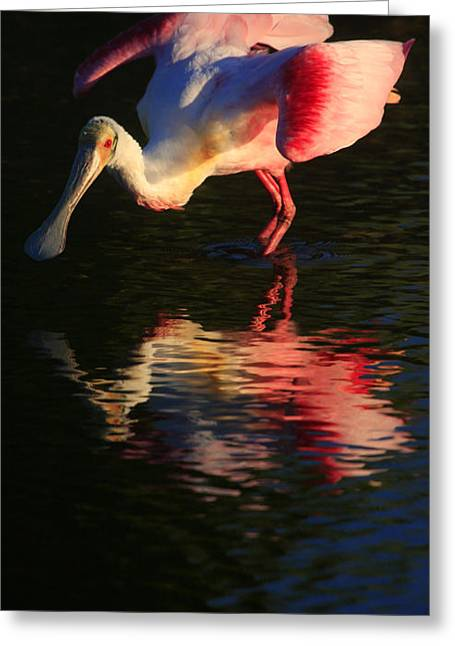 Spoonbill Island Reflection Greeting Card