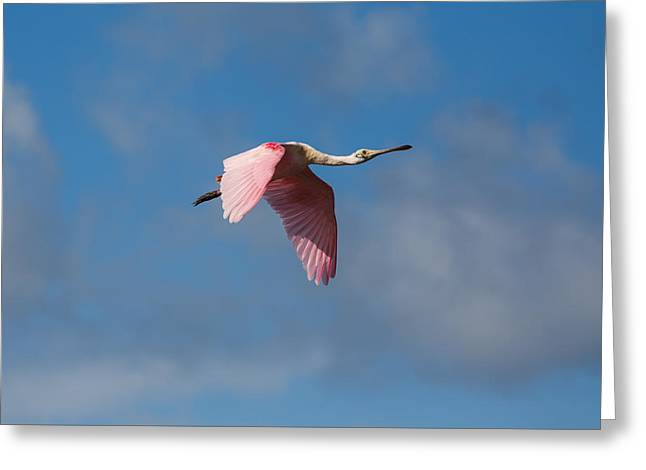 Greeting Card featuring the photograph Spoonie In Flight by John M Bailey
