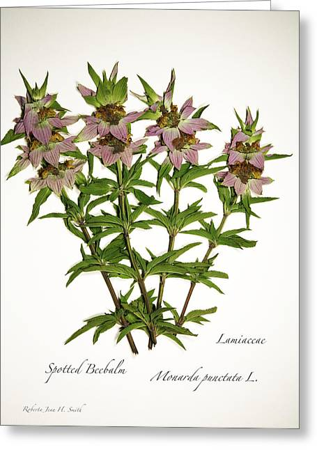 Spotted Beebalm 1 Greeting Card