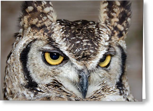 Spotted Eagle Owl Or African Eagle Owl Greeting Card