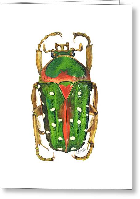 Spotted Flour Beetle Greeting Card