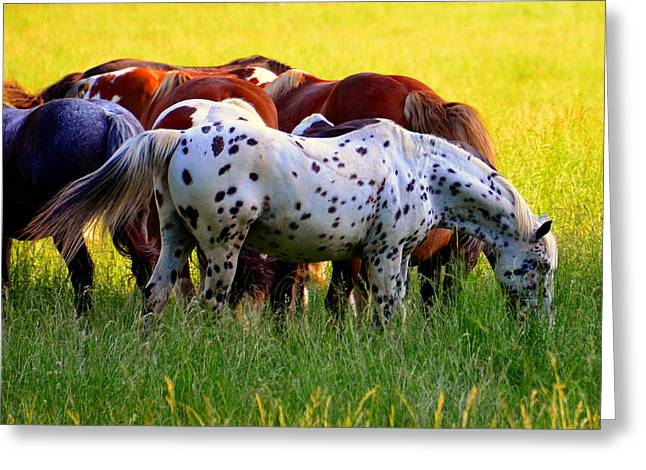 Spotted Horse Greeting Card by David Lee Thompson