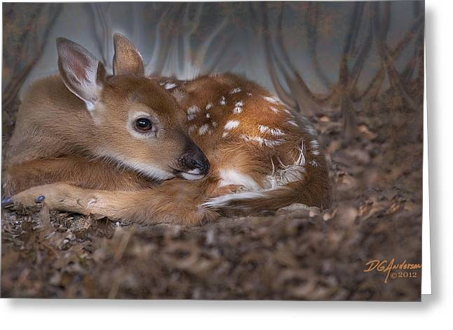 Spotted Innocence Greeting Card by Don Anderson