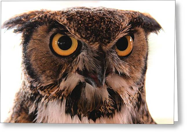 Spotted Owl 1 Greeting Card