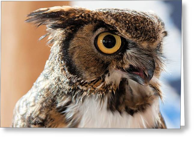 Spotted Owl 2 Greeting Card