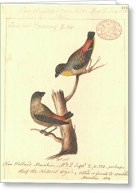 Spotted Pardalote Greeting Card by Natural History Museum, London