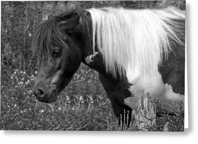 Spotted Pony Greeting Card by Joyce  Wasser