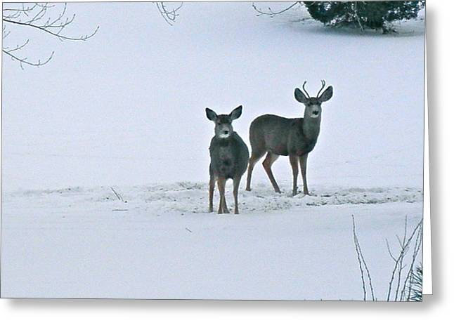 Spotted Greeting Card by Shannon Hamilton