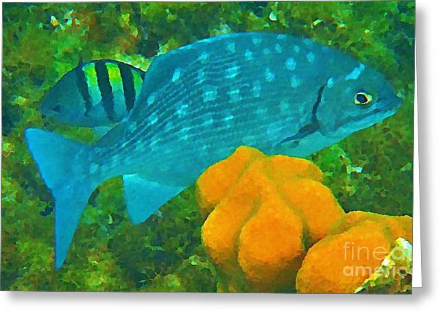Spotted Surgeon Fish Greeting Card by John Malone