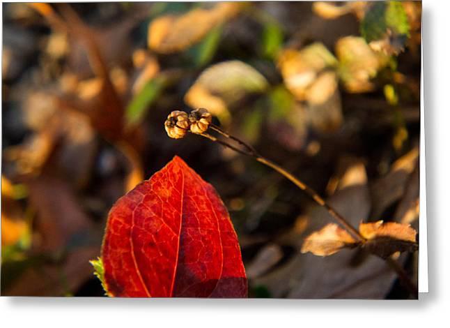 Spotted Wintergreen Seedpod And Sawbriar Leaf Greeting Card