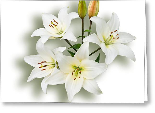 Spray Of White Lilies Greeting Card by Jane McIlroy