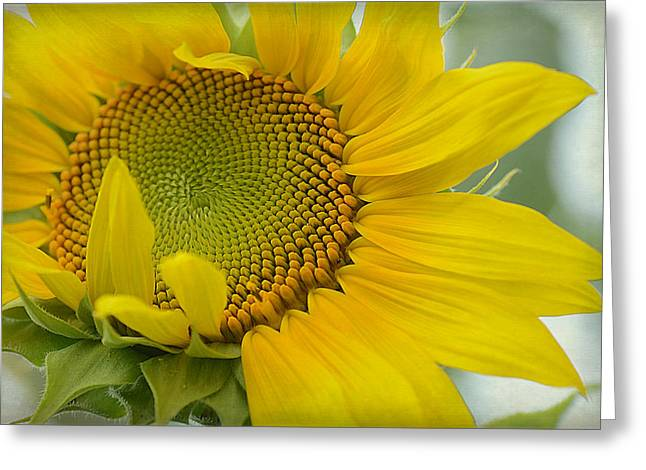 Spread A Little Sunshine Greeting Card