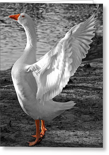 Spread Your Wings B And W Greeting Card