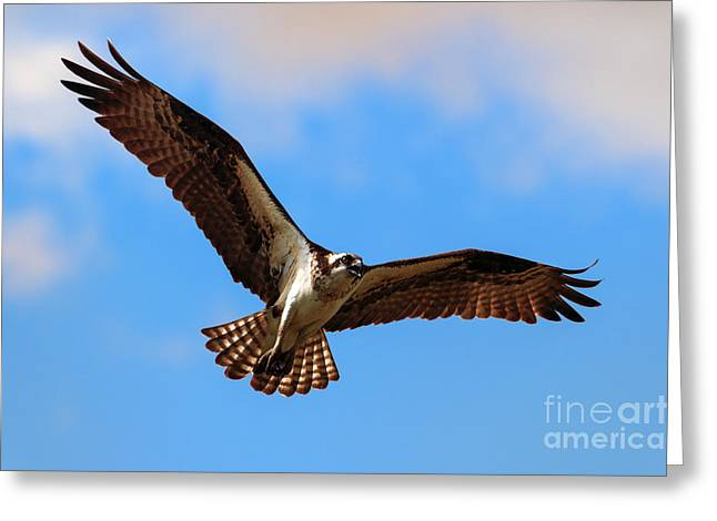 Spread Your Wings Greeting Card by Mike  Dawson
