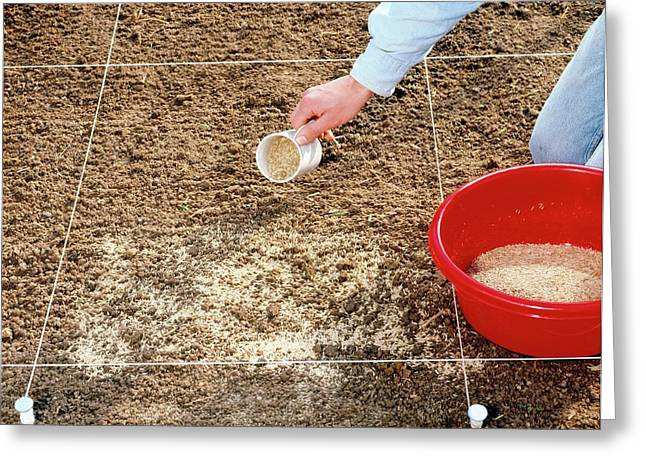 Spreading Grass Seeds Greeting Card by Science Photo Library