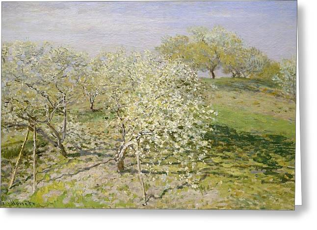 Spring - Fruit Trees In Bloom Greeting Card