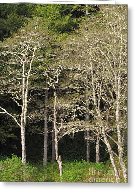 Spring Alders Greeting Card by Frank Townsley
