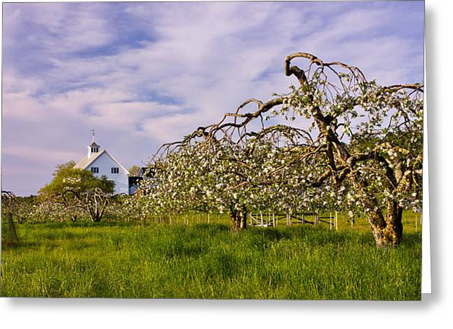 Spring Apple Orchard Greeting Card by Benjamin Williamson