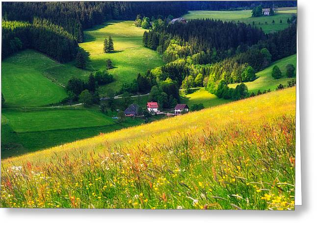 Spring At Black Forest Greeting Card