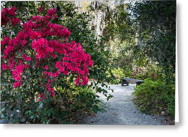 Spring At Magnolia Plantation 2 Greeting Card