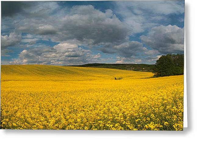 Spring At Oilseed Rape Field Greeting Card by Davorin Mance