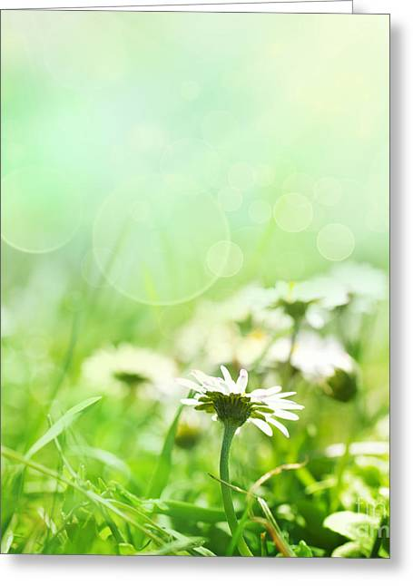 Spring Background With Flowers Greeting Card by Mythja  Photography