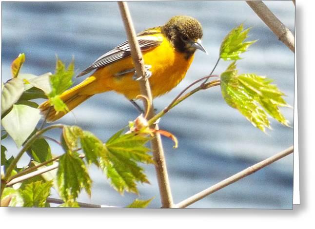 Spring Bird  Greeting Card by Lisa Roy